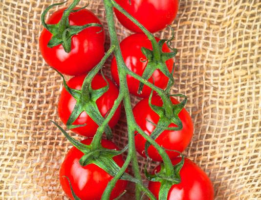 عکس با کیفیت گوجه فرنگی تازه