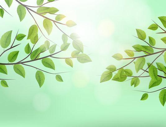 وکتور پس زمینه برگ درختان