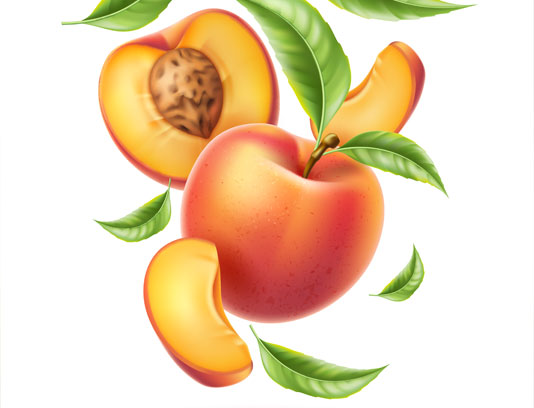 وکتور برش میوه ی هلو