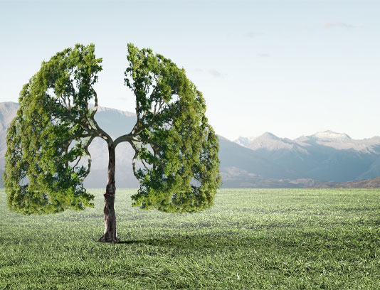 عکس مفهومی درخت به شکل ریه انسان