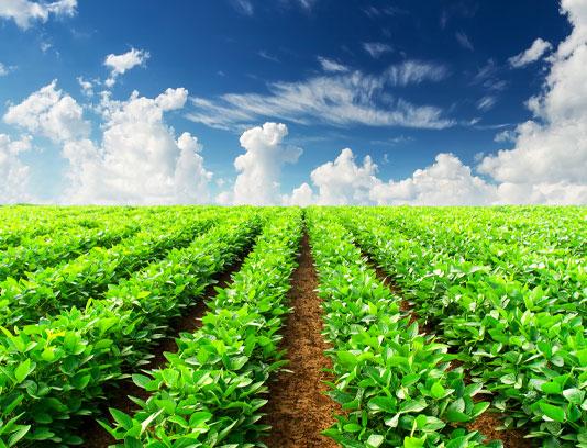 عکس مزرعه کشاورزی سبزیجات