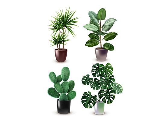 وکتور گیاه و گلدان با کیفیت