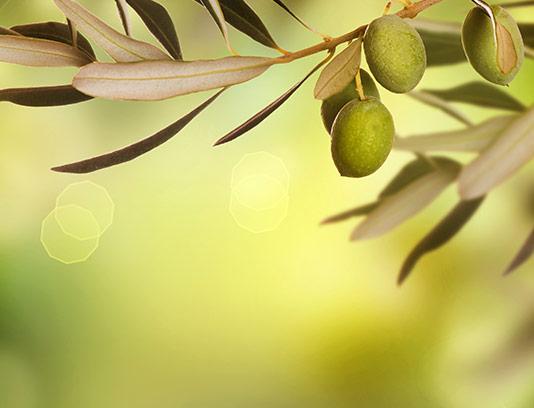 طرح پس زمینه زیتون سبز