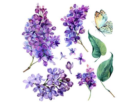وکتور گل یاس بنفش و پروانه