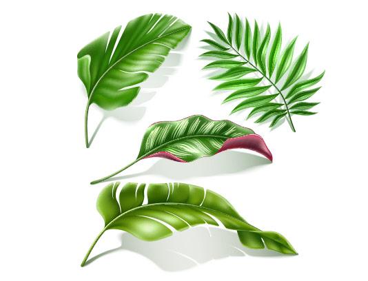 وکتور انواع برگ های سبز