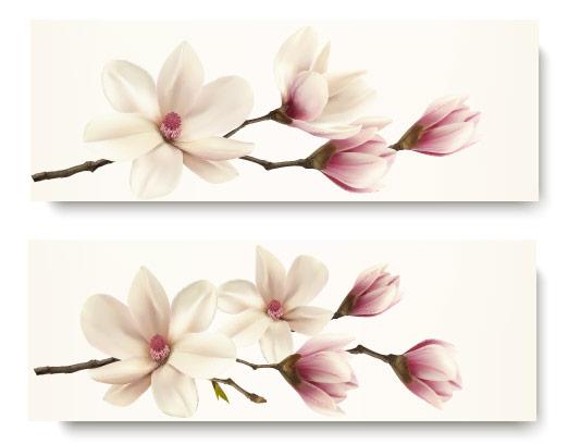 وکتور شکوفه های بهاری سفید