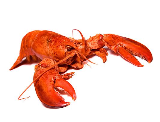 عکس خرچنگ قرمز با کیفیت