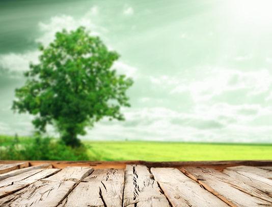 پس زمینه چوب و منظره