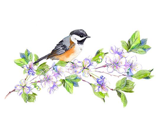 عکس نقاشی آبرنگ گل و پرنده