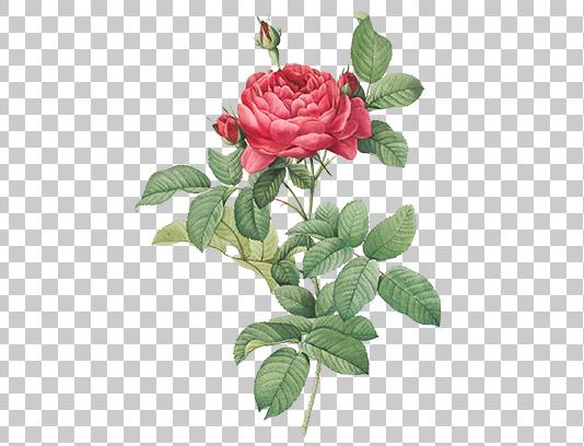 عکس گل دوربری شده صورتی