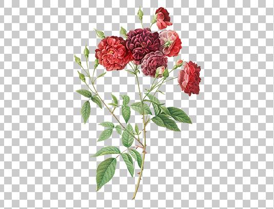 عکس گل دوربری شده زیبا