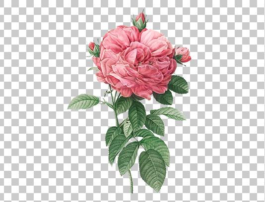 عکس گل دوربری شده طرح آبرنگ