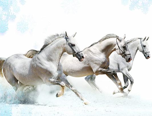 عکس اسب سفید دونده با کیفیت