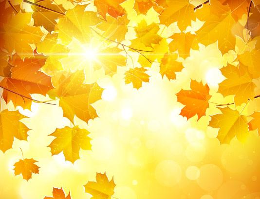 پس زمینه پاییزی طرح برگ زرد
