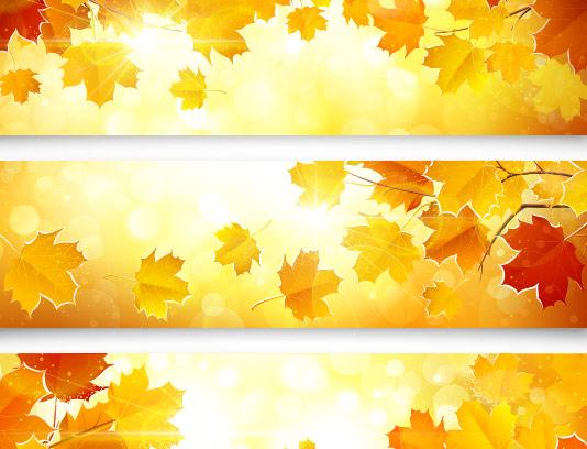 وکتور بنر برگ های پاییزی