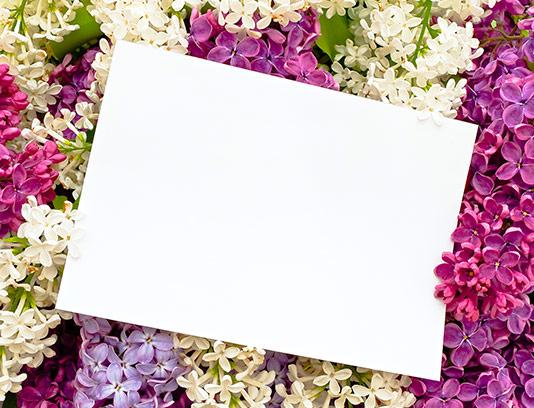 عکس کادر گل های رنگی