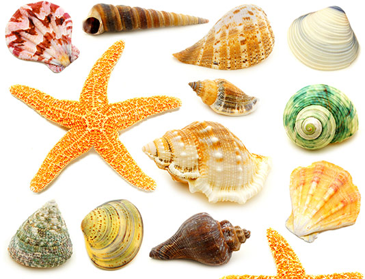 عکس صدف و ستاره دریایی