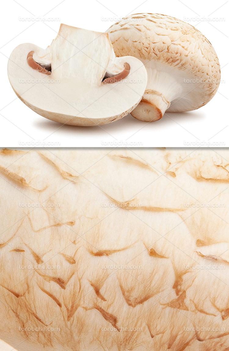 عکس قارچ تازه با کیفیت
