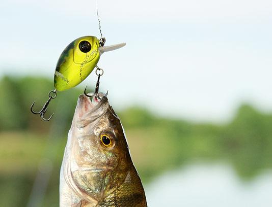 عکس شکار ماهی با کیفیت