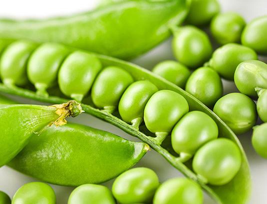 عکس دانه های نخود سبز