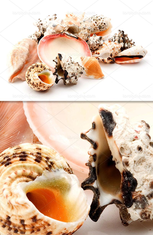 عکس صدف دریایی رنگی