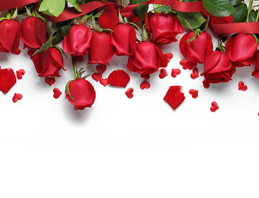 پس زمینه گل رز قرمز