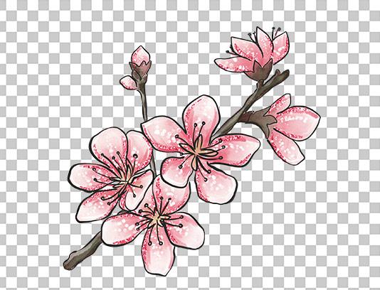 عکس دوربری شده شکوفه بهاری