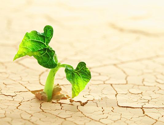 عکس رشد گیاه با کیفیت