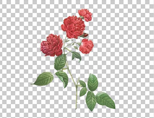 عکس دوربری شده گل