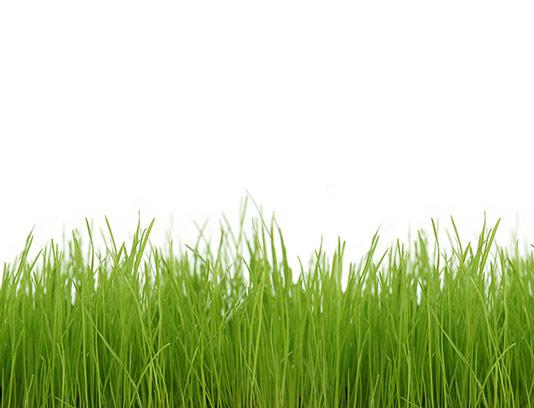 عکس چمن و سبزه با کیفیت