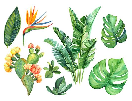عکس نقاشی انواع برگ