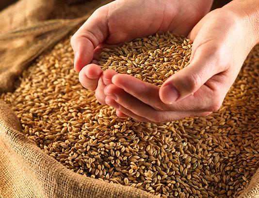 عکس برنج با پوست با کیفیت