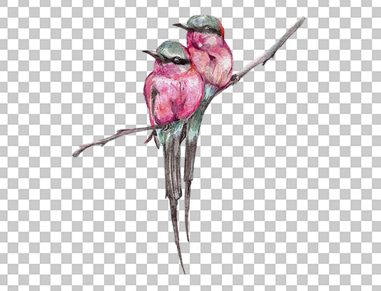 عکس دوربری شده پرنده