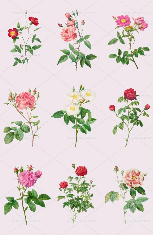 وکتور انواع شاخه گل