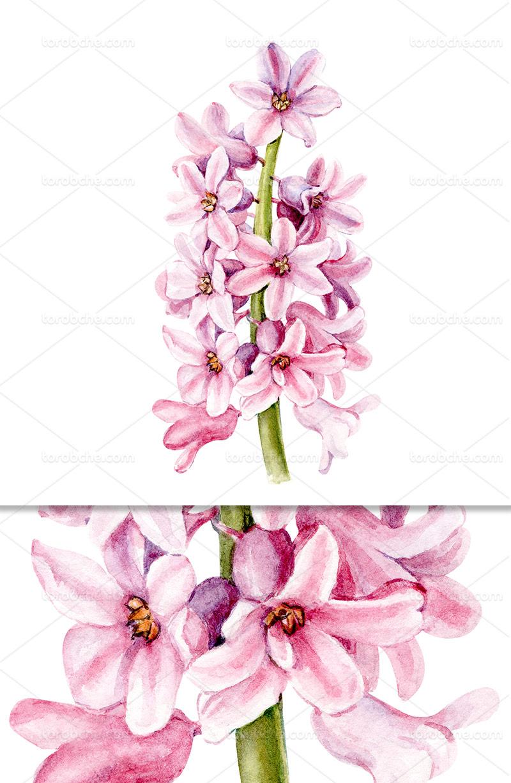 عکس گل صورتی با کیفیت