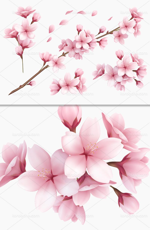 وکتور شکوفه ی بهاری