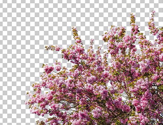عکس شکوفه بهاری دوربری