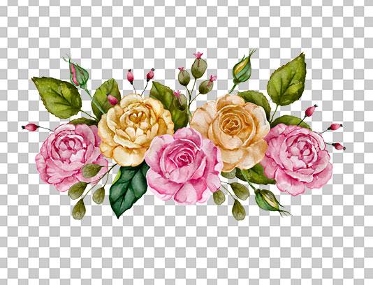 عکس دوربری شده گل رز رنگی