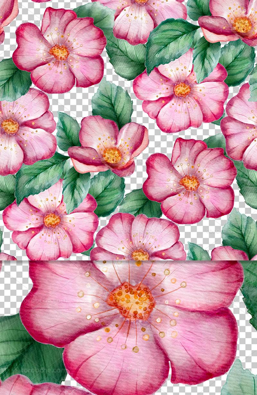 عکس دوربری شده گل و برگ صورتی
