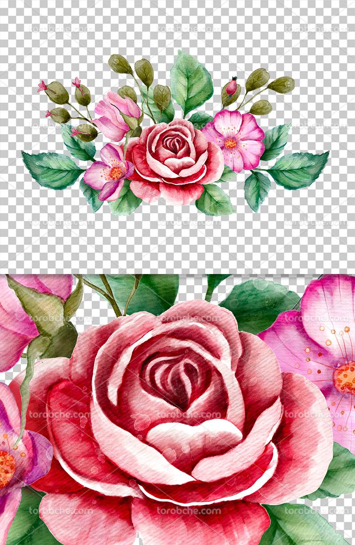 عکس دوربری شده گل رز سرخ