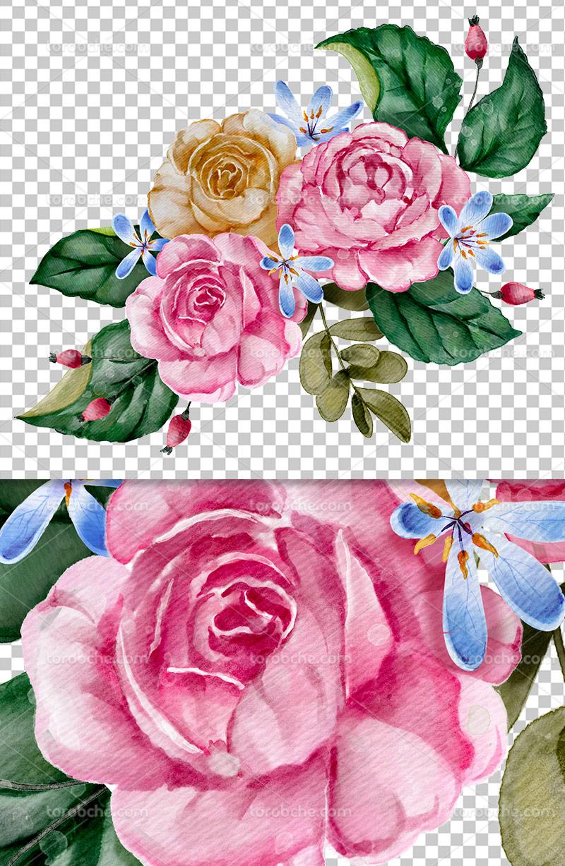 عکس دوربری شده گل رنگی