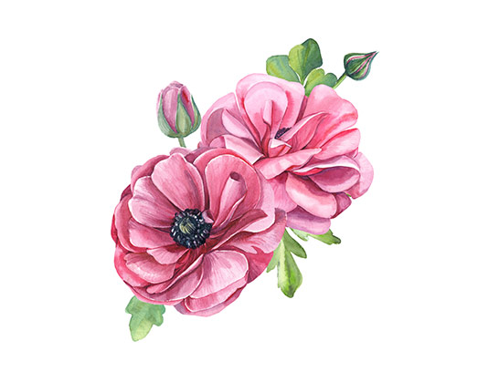عکس نقاشی گل صورتی