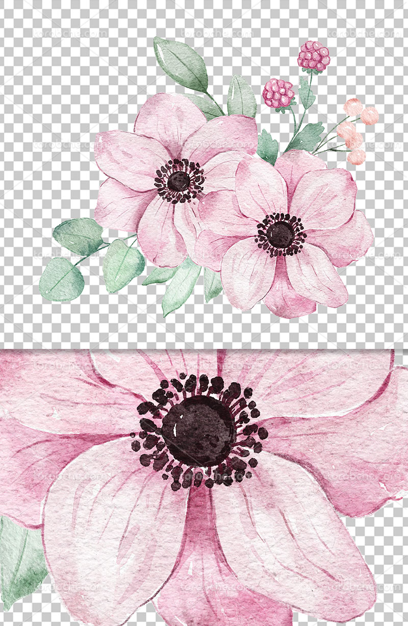 عکس دوربری شده گل صورتی