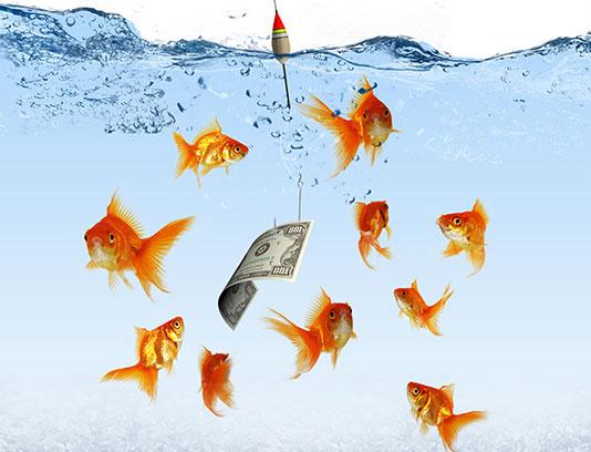 عکس ماهی قرمز با کیفیت