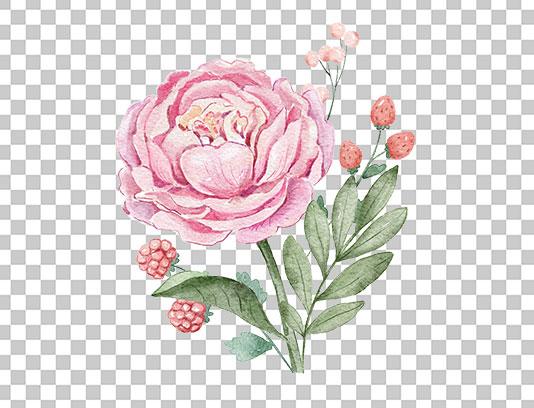 عکس گل صورتی دوربری شده